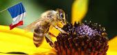 Plan de protection des abeilles en France